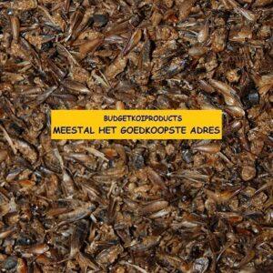 BUDGETKOIPRODUCTS gedroogde-krekels